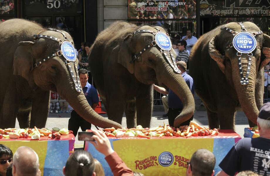 A crowd watches as the Ringling Bros. and Barnum & Bailey circus elephants take part in an elephant brunch outside the Times Union Center on Thursday May 2, 2013 in Albany, N.Y. (Michael P. Farrell/Times Union) Photo: Michael P. Farrell
