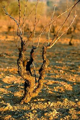 Photo of Priorat vineyard, Spain.  Credit: Courtesy wines from Spain Ran on: 01-12-2007 Grapevines have grown in Priorat since the Middle Ages. Ran on: 01-12-2007