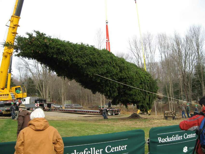 A large Norway spruce tree in the Easton, CT yard of Maria Corti was chosen as the 2009 Rockefeller Center Christmas tree. Crews were on hand to take the tree down on Wednesday November 11, 2009. Lots of local folks came to watch the excitement.