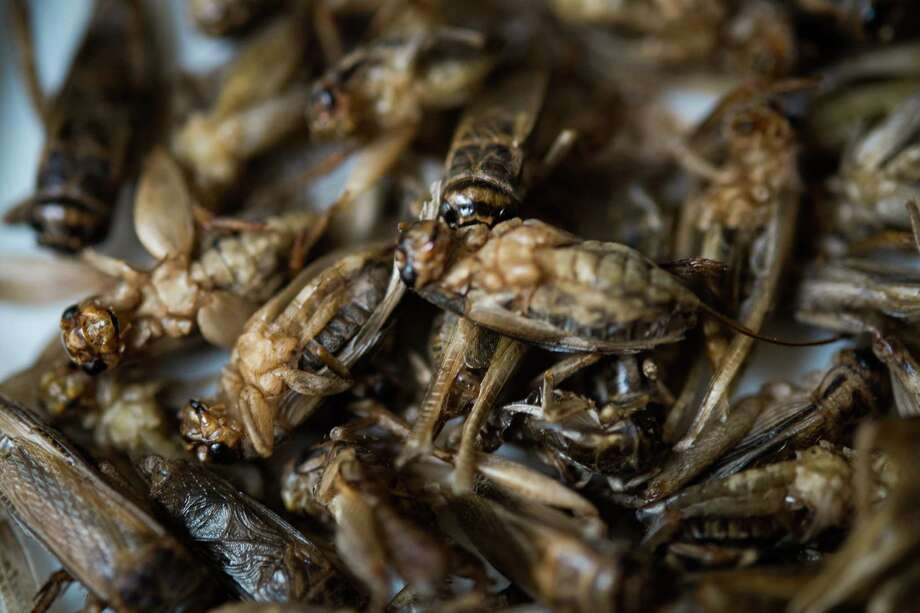 A dish of crickets are displayed in the restaurant 'Aphrodite' run by French chef David Faure on May 2, 2013 in Nice, France. Crickets and worms as produce for culinary requirements cost up to 1250 euros per kilogramme on May 2, 2013 in Nice, France. Faure's restaurant, renowned for it's innovative and inventive cuisine, has been awarded one star in the Michelin Guide. Photo: Didier Baverel, Getty / 2013 Didier Baverel
