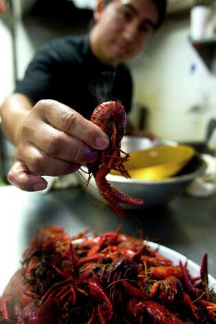 Orlando Argueta holds a crawfish as he prepares a plate of crawfish at Floyd's Cajun Seafood restaurant at Nasa Road 1 and the Gulf freeway Wednesday, May 5, 2010, in Houston. With the threat of the oil spill from the sunken Deepwater Horizon drilling rig, seafood like oysters, crawfish, shrimp and other Gulf seafood staples could be in short supply soon. ( Brett Coomer / Houston Chronicle ) Photo: Brett Coomer, Staff / Houston Chronicle