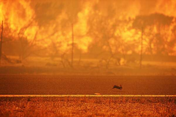 A rabbit runs from a wildfire burning along the Pacific Coast Highway near Point Mugu State Park in Ventura County, California, on May 3, 2013. Some 4,000 homes were threatened by a growing wildfire northwest of Los Angeles that has forced the closure of California's scenic coastal highway, firefighters said Friday.     AFP PHOTO / ROBYN BECKROBYN BECK/AFP/Getty Images