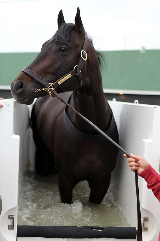 A horse is treated in a HorseSpa, which gives hydro therapy treatment for injuries on the morning of the Kentucky Derby at Churchill Downs Saturday, May 4, 2013, in Louisville, Ky.  Today is the 139th running of the Kentucky Derby. (AP Photo/Gregory Payan) Photo: Gregory Payan, Associated Press
