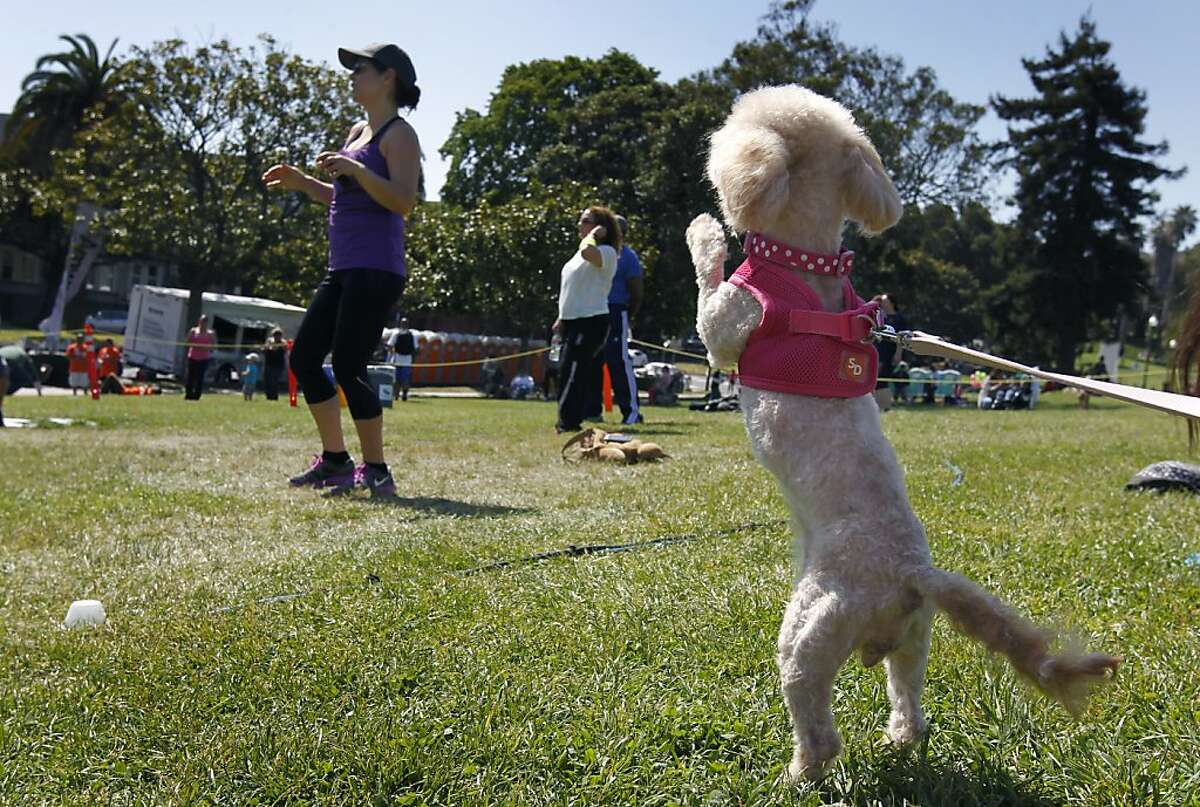 Coco wants to get in on the Zumba-thon exercise dance session with her owner Karla Lopez-Lee (left) at the annual Cinco de Mayo celebration at Dolores Park in San Francisco, Calif. on Saturday, May 4, 2013.
