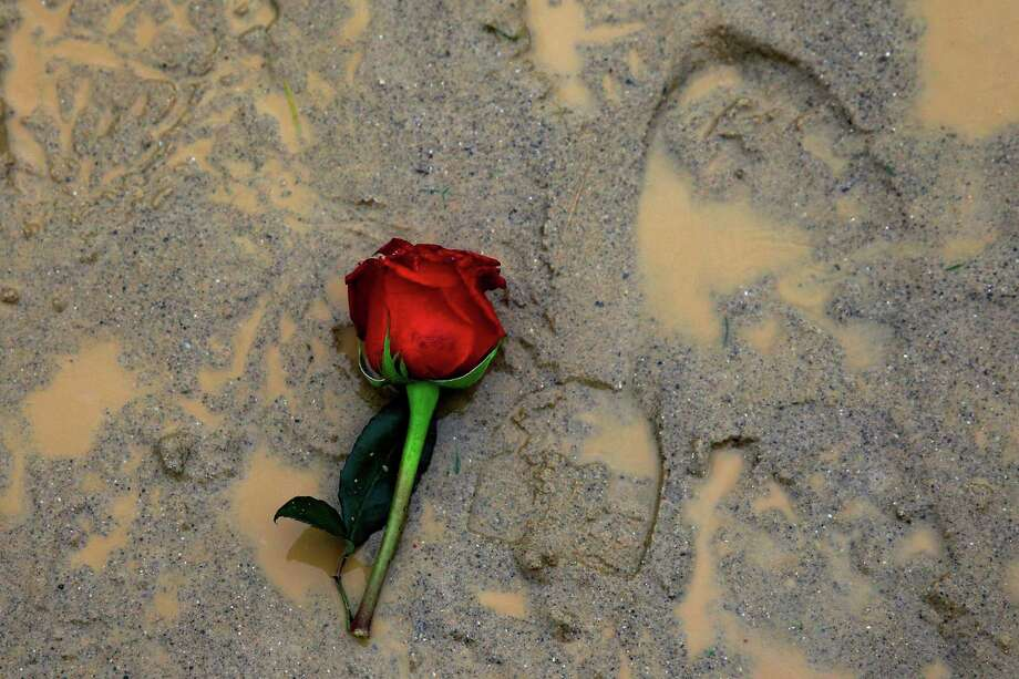 A rose sits in the mud during the 139th running of the Kentucky Derby at Churchill Downs on May 4, 2013 in Louisville, Kentucky. Photo: Rob Carr, Getty Images / 2013 Getty Images