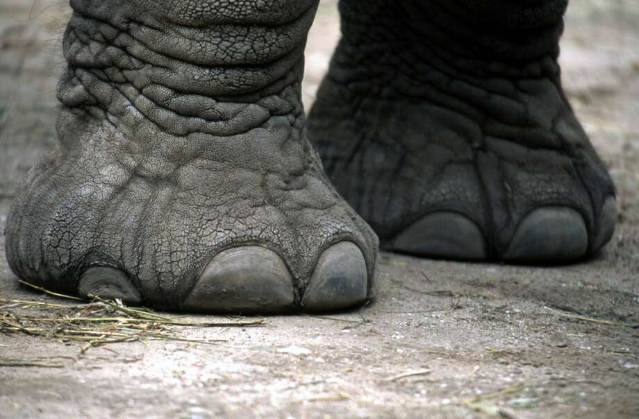 ... your feet also look pretty gnarly,  after being neglected and hidden in boots for months. Photo: Chuck Eckert, Getty Images/age Fotostock RM