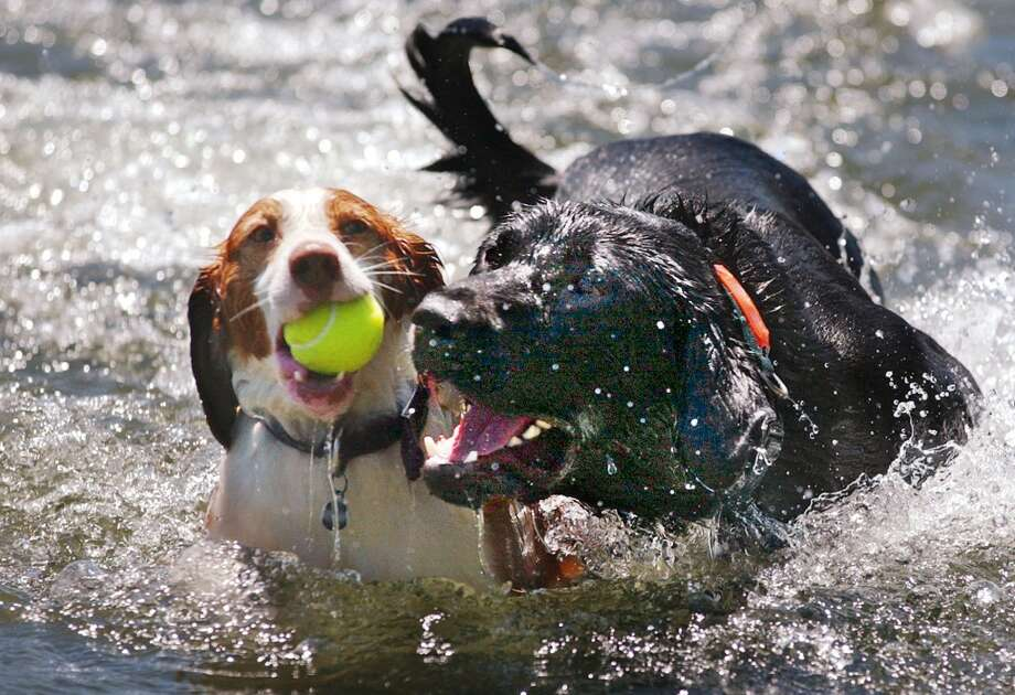 ...the only ones swimming in the lakes are dogs and crazy young people. Photo: ELAINE THOMPSON, Associated Press
