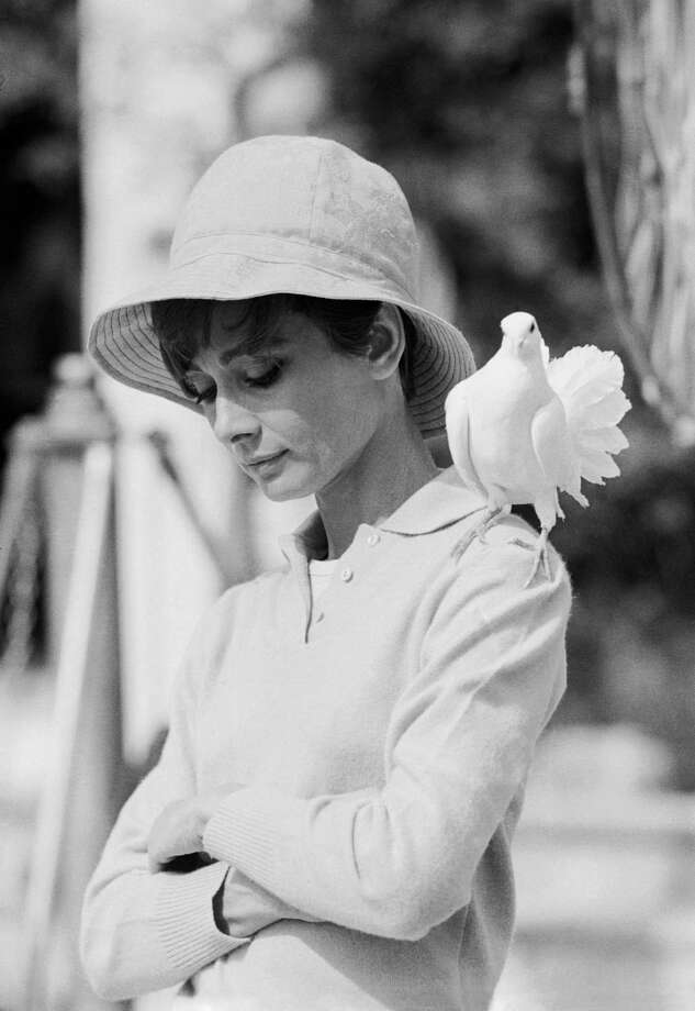 A contemplative Audrey Hepburn with a dove perched on her shoulder. Photo: Terry O'Neill, Getty / 2005 Getty Images