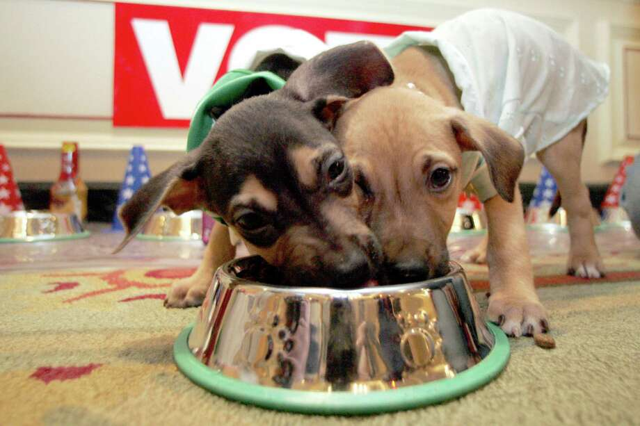 Flop (left) and Ace enjoy a bowl filled with specialty dog food. Although high-end brands have less filler and more protein, some dogs don't need pricey gourmet food to have a healthful diet, experts say. Photo: Associated Press