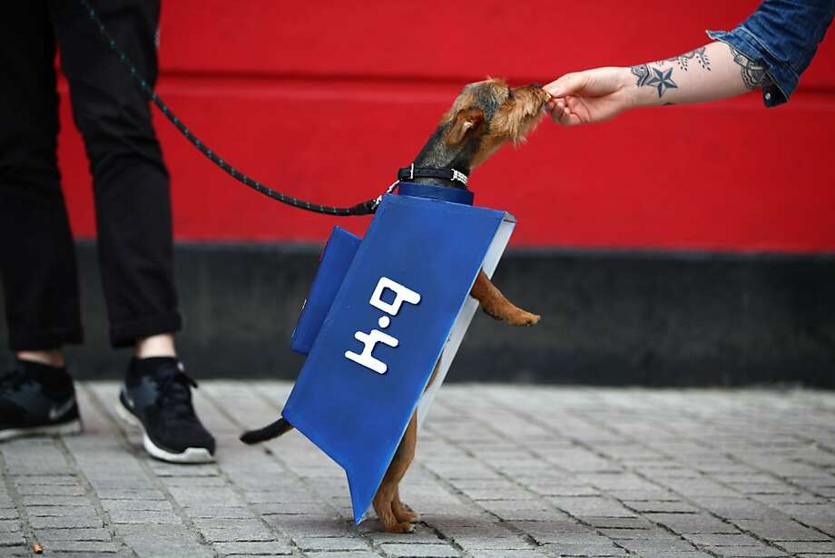 """A K-9 from the """"Doctor Who"""" TV series(a.k.a., Missy the Chorkie) takes a break from parading during Sci-Fi London in order to snarf down a treat. Photo: Jordan Mansfield, Getty Images"""