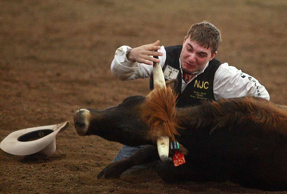 Northeastern Junior College steer wrestler Kelby Bond struggles to bring down his steer on Sunday, May 5, 2013 at the Laramie River Rendezvous college rodeo in Laramie, Wyo. (AP Photo/Casper Star-Tribune, Alan Rogers) Photo: Alan Rogers, Associated Press
