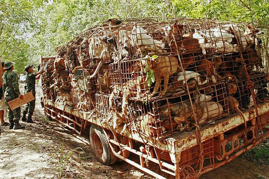 Canine rescue: Thai soldiers inspect a vehicle carrying dogs in cages in Bueng Kan province near the Thai-Laos 
