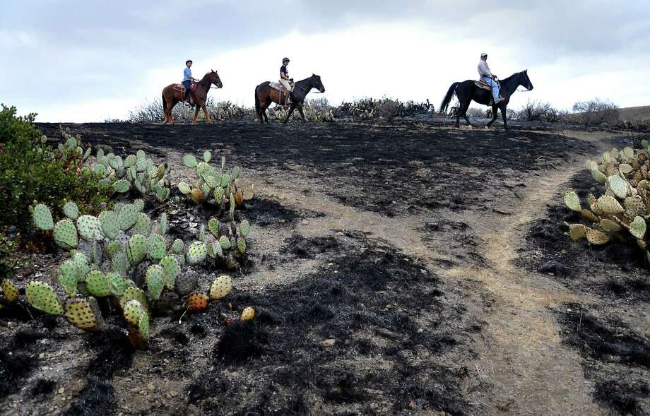Horseback riders pass the burned area of the Santa Monica Mountains National Recreation Area in Newbury Park, Calif.  on May 6, 2013, where some cactus survived the spring fire. Investigators ruled out arson as the cause of the fire that charred 44 square miles at the western end of the Santa Monica Mountains. (AP Photo/Tina Burch) Photo: Tina Burch, Associated Press / Tina Burch