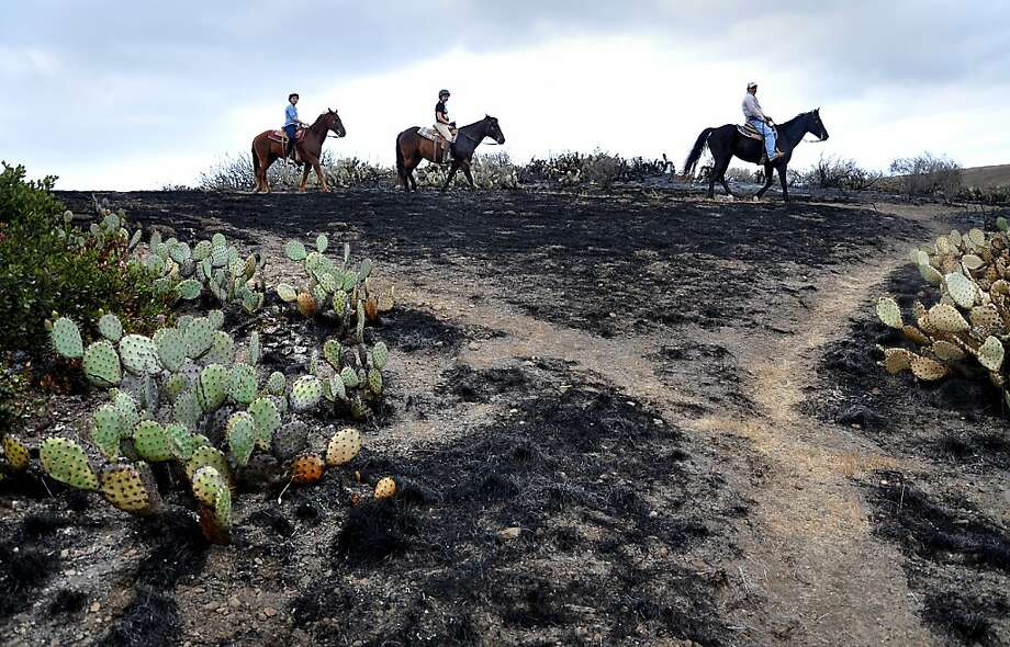 Horseback riders pass the burned area of the Santa Monica Mountains National Recreation Area in Newbury Park, Calif.  on May 6, 2013, where some cactus survived the spring fire. Investigators ruled out arson as the cause of the fire that charred 44 square miles at the western end of the Santa Monica Mountains. (AP Photo/Tina Burch) Photo: Tina Burch, Associated Press