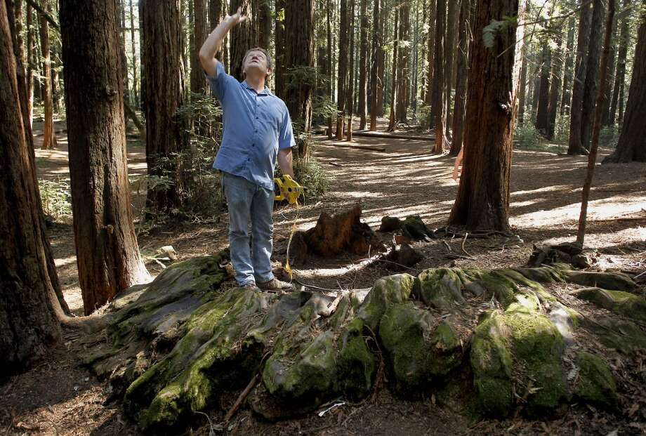 Todd Keeler-Wolf Senior Vegetation Ecologist for the California Department of Fish and Game measures the stump of an old growth landmark redwood tree in Redwood Regional Park in Oakland, Calif., on Friday May 3, 2013. The tree stump measured sixteen feet across. A visit to the Oakland Hills to discover the last remnants of the Blossom Rock trees and the old growth landmark redwoods that once guiding sailing ships through San Francisco Bay as a navigation reference point.