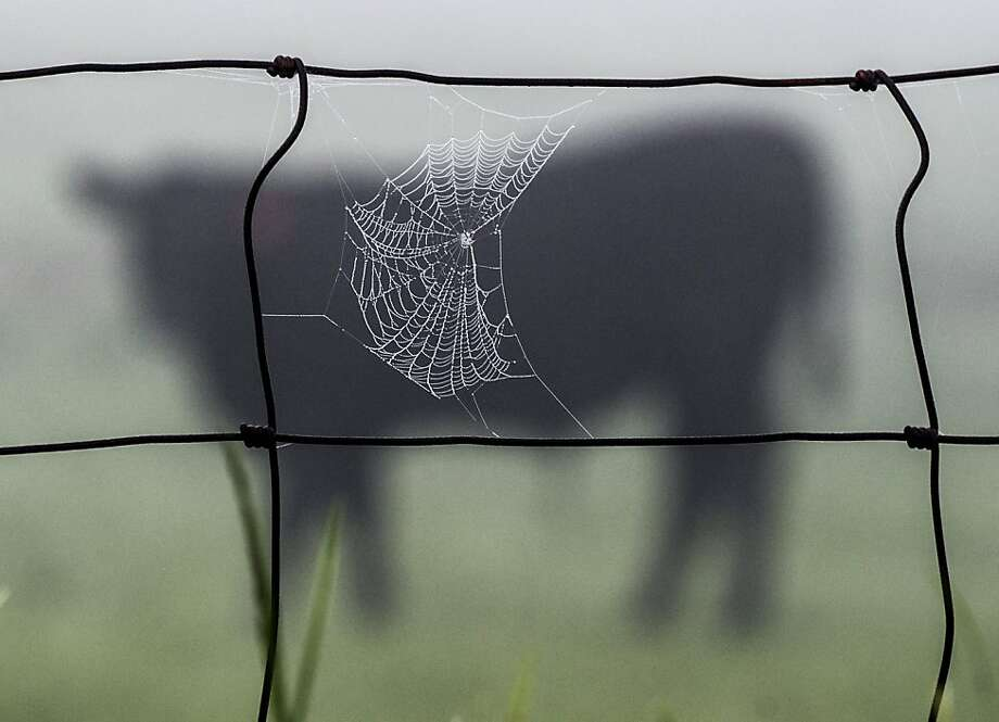 Dew settles on a spider web attached to a fence on a farm near Danville, Ky. Photo: Clay Jackson, Associated Press