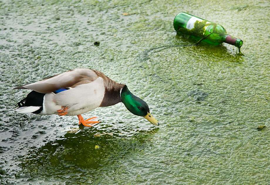Dang, I spilled my wheat grass smoothie. (Park in Munich.) Photo: Peter Kneffel, AFP/Getty Images