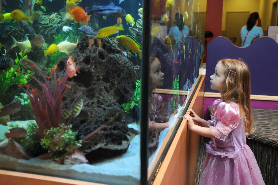 Ruby Guynes, 4, of Spring, checks out the updated aquarium at The Woodlands Children's Museum. Photo: Jerry Baker, Freelance
