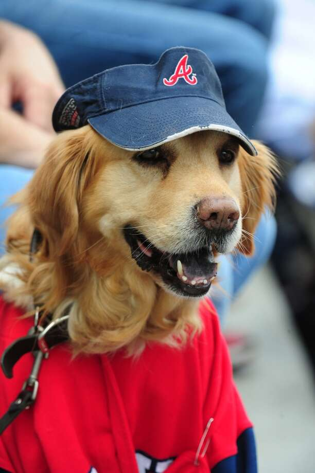 The Atlanta Braves host Bark In The Park for fans to bring their dogs to the game against the New York Mets at Turner Field on May 5, 2013 in Atlanta, Georgia.