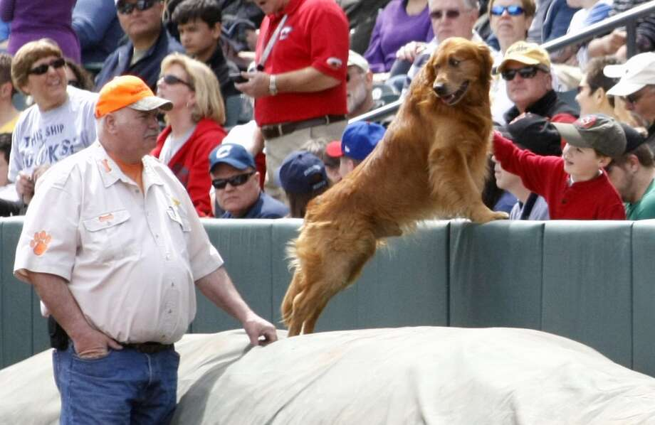 "In this April 14, 2013 photo, Jeff Marchal  of Herrod, Ohio watches as ""Jake the Diamond Dog""  says hello to fans at the Huntington Park ballpark in Columbus, Ohio for the Minor League baseball game between the Indianapolis Indians and the Columbus Clippers."