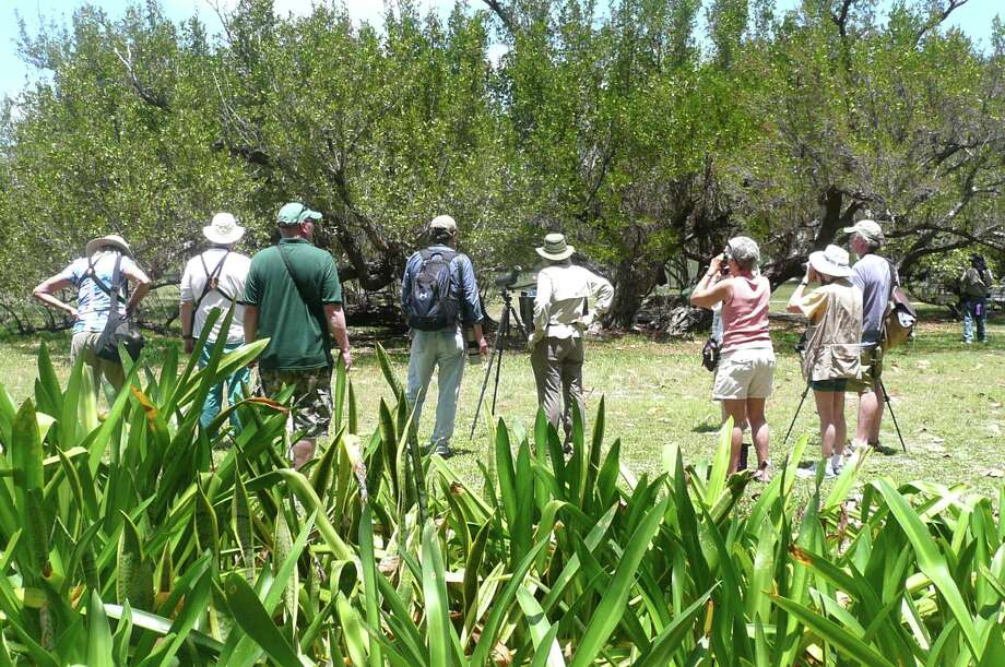 During her recent trip, Anne's search for migratory birds began early mornings with the leader of her group calling off the names of warblers and hummingbirds and Baltimore Orioles and Orchard Orioles and Indigo Buntings that were flying in and out of the bushes within Fort Jefferson on the Dry Tortugas. Photo: Anne W. Semmes
