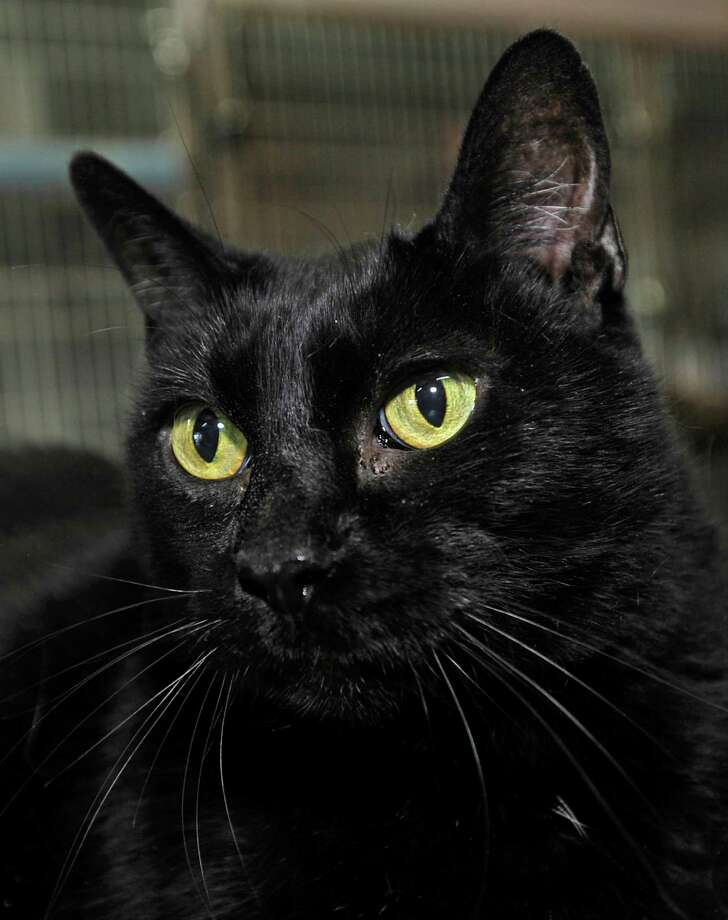 It has long been a superstition that a black cat crossing your path is bad luck. This dates back to the middle ages, when it was believed they were in the service of witches, or may even be a witch in disguise. If one crossed your path, it meant the devil was watching you. Source: Today.com.