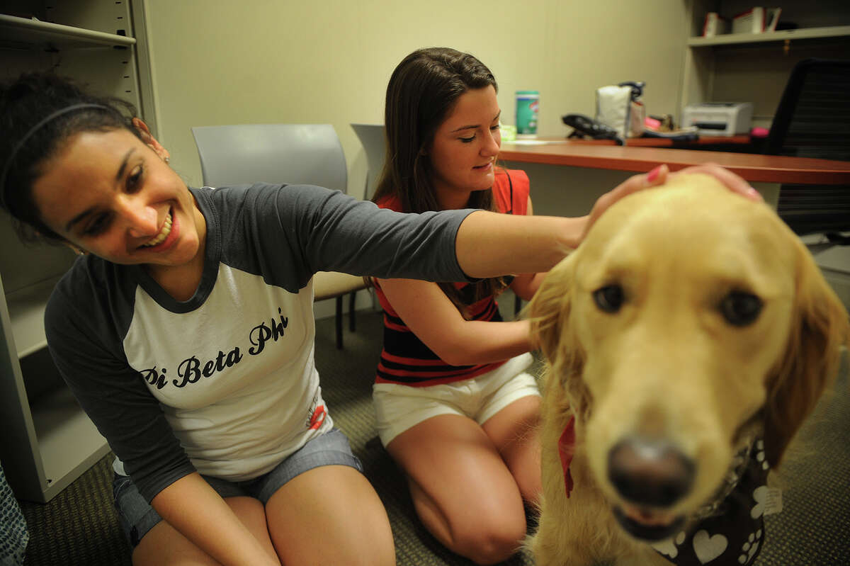 Quinnipiac University students Liana Vicari, left, of Commack, NY, and Elan DeLuca, of Princeton, NJ, spend some time with therapy dog Aubry, while participating in a occupational therapy study at the school's North Haven, Conn. campus on Tuesday, May 7, 2013. The students heart rates and blood pressure were tested both before and after interacting with the dog, to determine if the dogs can help relieve stress.