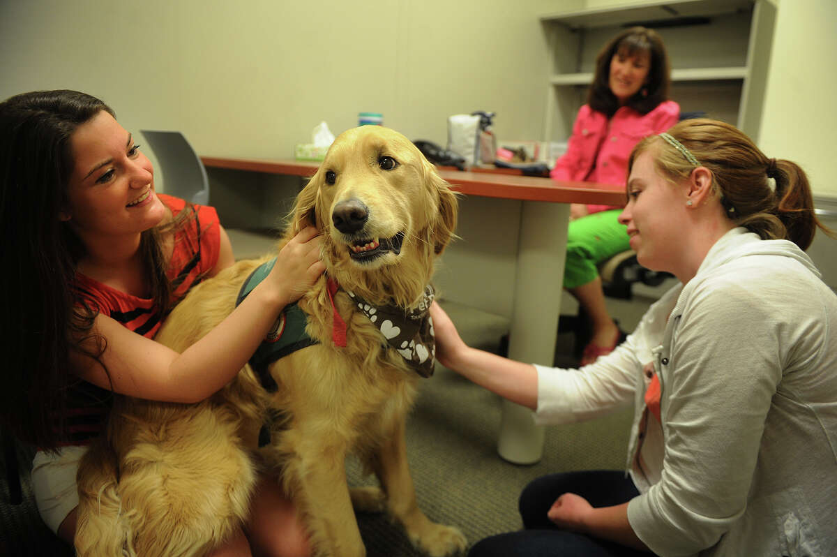 Quinnipiac University students Elan DeLuca, left, of Princeton, NJ, and Alison Irving, of Danvers, MA, spend some time with therapy dog Aubry, owned by occupational therapy professor Donna Latella, while participating in study at the school's North Haven, Conn. campus on Tuesday, May 7, 2013. The students heart rates and blood pressure were tested both before and after interacting with the dog, to determine if the dogs can help relieve stress.