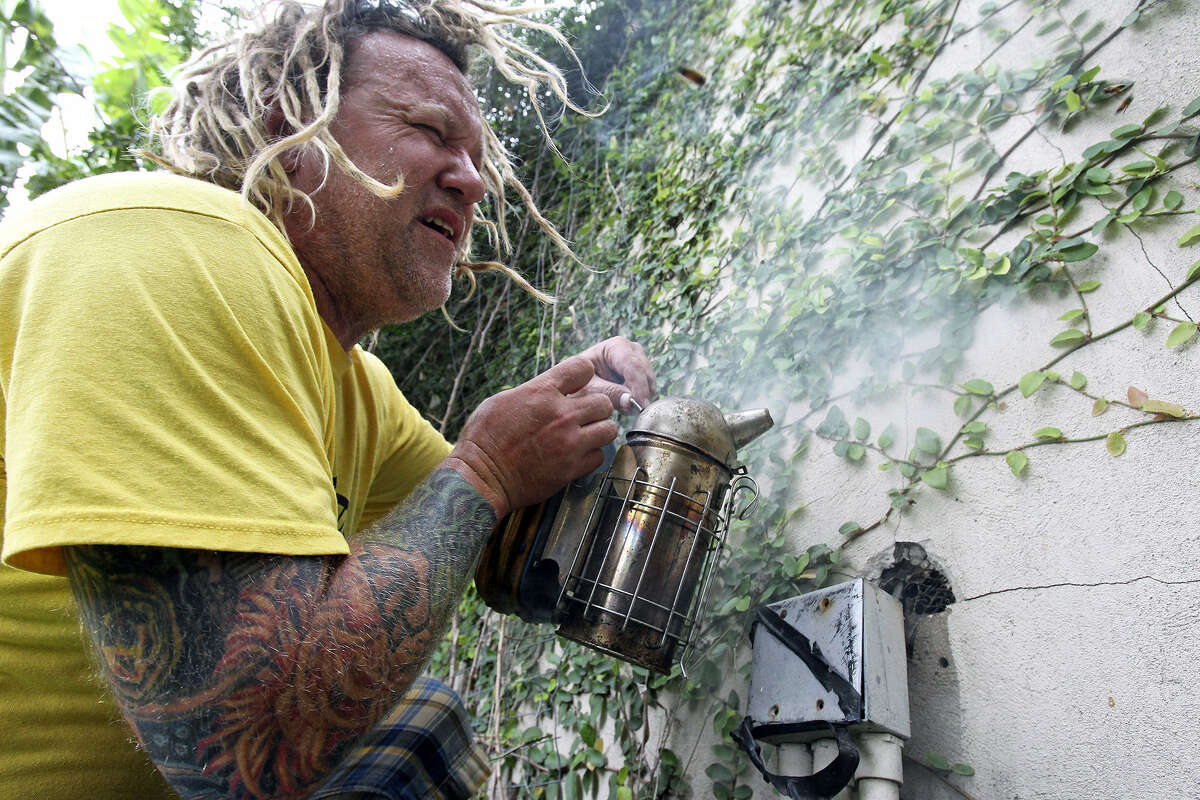 Walter Schumacher, an Austin bee rescue and relocation expert, uses smoke near a hole that's the entrance of a beehive in a wall on the West Side before he and his crew remove the hive and relocate its inhabitants in this May 7, 2013, photo.