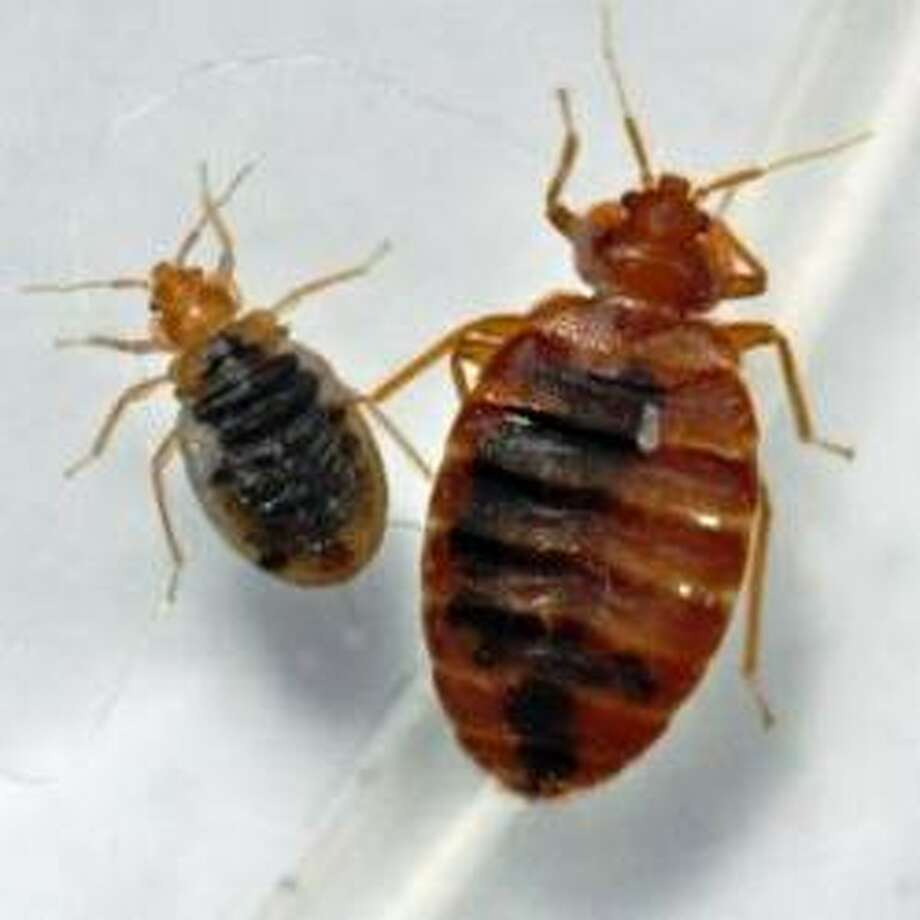 According to Terminix, these are the 10 cities with the most bedbugs ... Photo: PRWeb