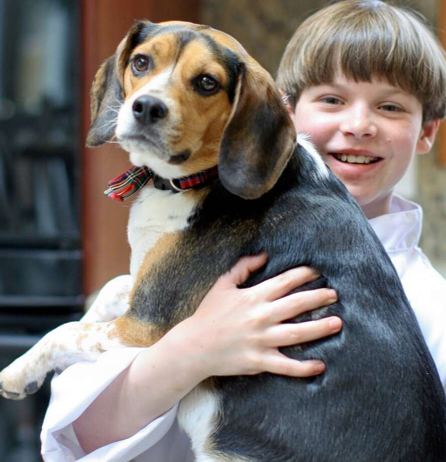 "Ryan Kelly, 11, of Stamford with his 18-month-old beagle, Barkley. Kelly secured an investment of $25,000 on a recent episode of ""Shark Tank."""