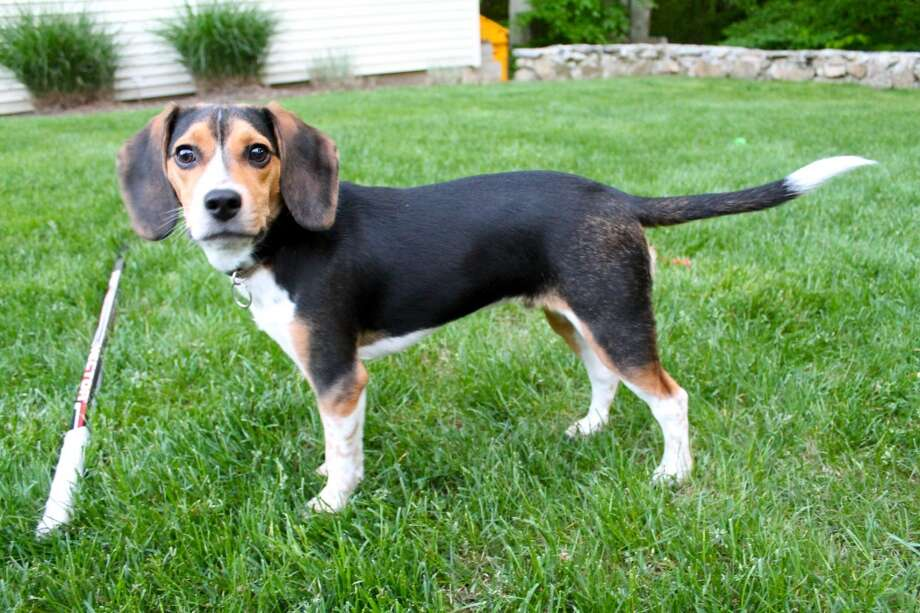 "Ryan Kelly's 18-month-old beagle, Barkley. Kelly secured an investment of $25,000 on a recent episode of ""Shark Tank."""