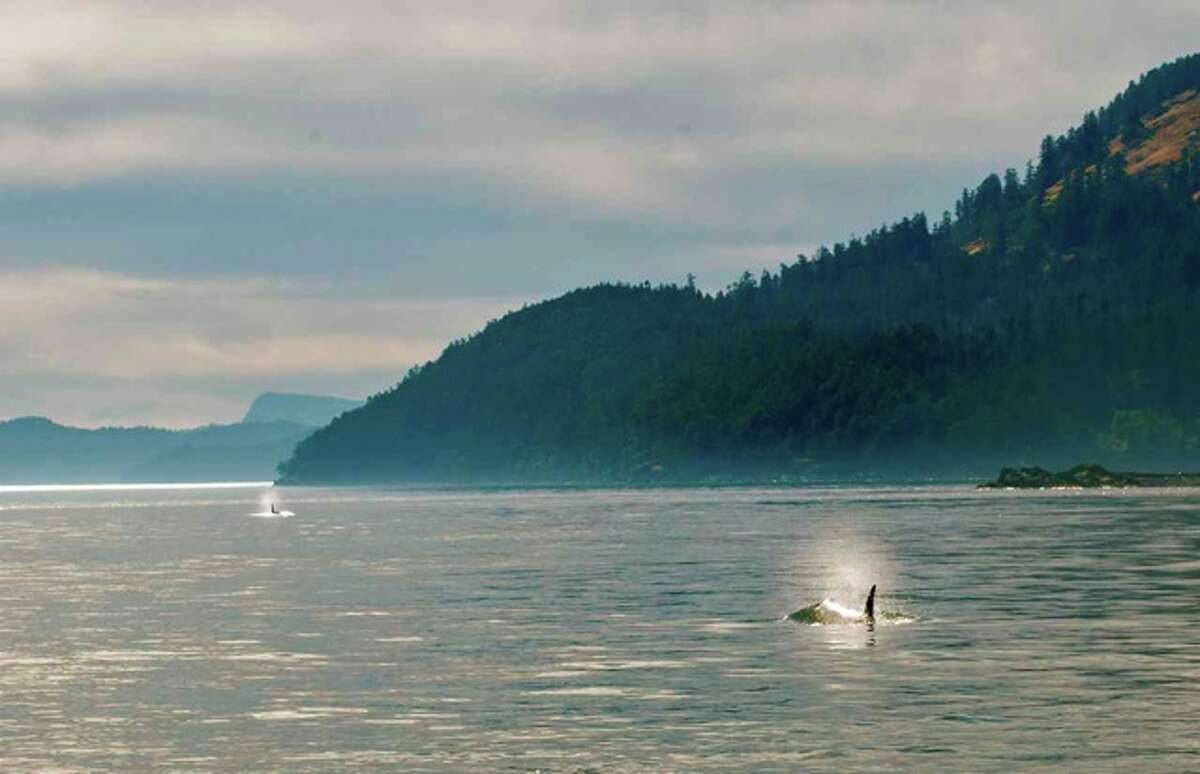 Residents headed south in the Haro Strait, Canadian Gulf Islands, in June. An oil port in British Columbia would send 400 oil tankers a year through Haro Strait.