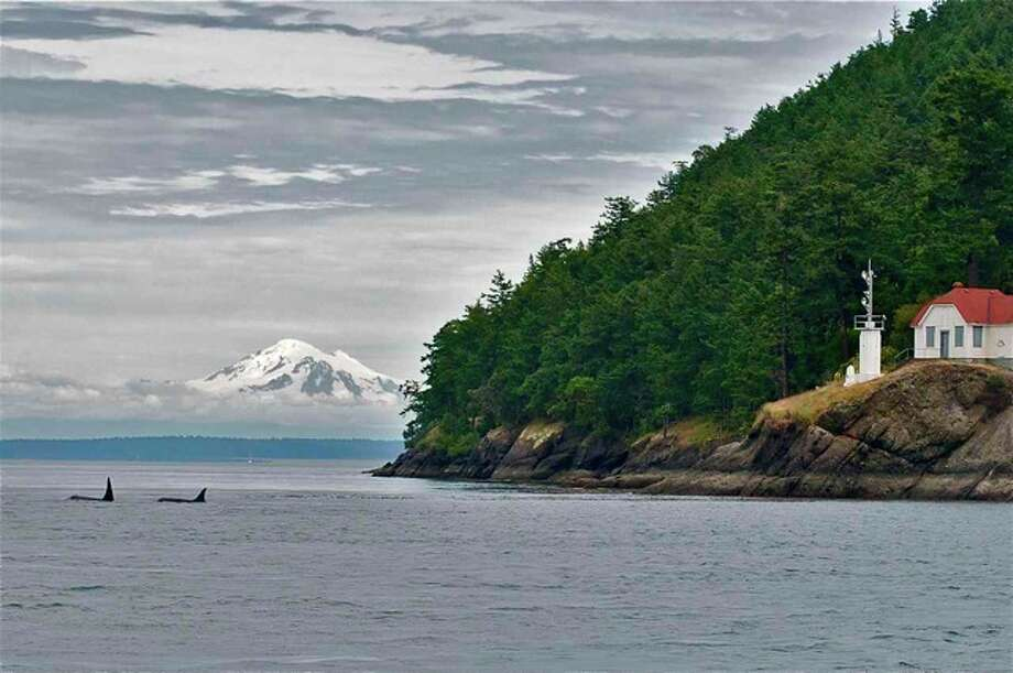 Turn Point on Stuart Island, L41, Mega, and  Mt. Baker. San Juan Islands, in June. Photo: Captain Jim Maya/www.mayaswhalewatch.biz