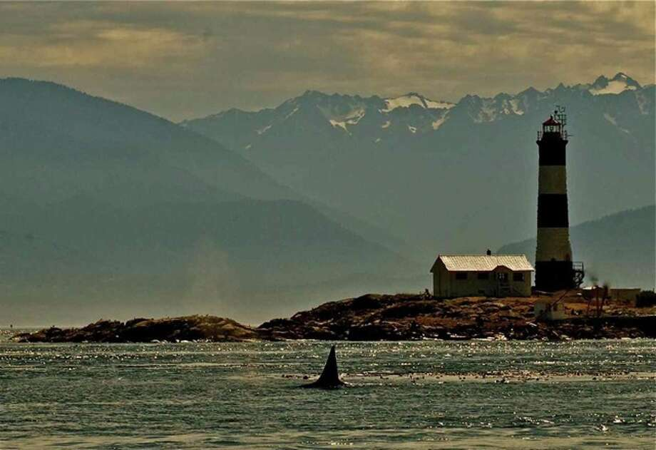 A transient orca at Race Rocks Light, BC, in March. Photo: Captain Jim Maya/www.mayaswhalewatch.biz