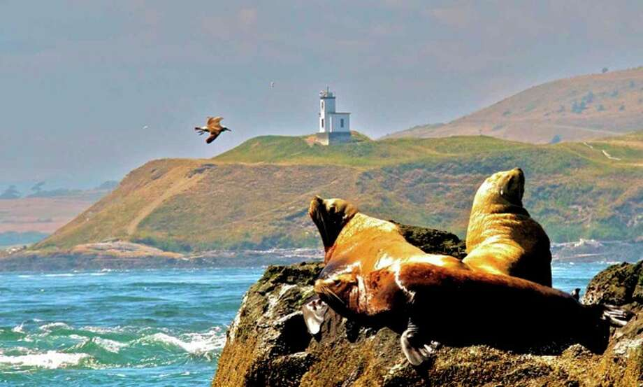 Steller Sea Lions on Whale Rocks, San Juan Islands, with Cattle Point Light in the background in August. Photo: Captain Jim Maya/www.mayaswhalewatch.biz