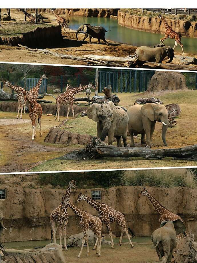 Meanwhile, the lions are all 'What about us?' The Dallas Zoo becomes the first zoo in North America to allow 