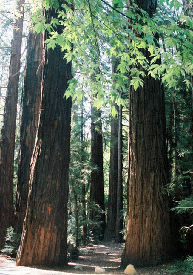 The towering redwoods of Big Sur have also been the site of celebrity weddings over the years.