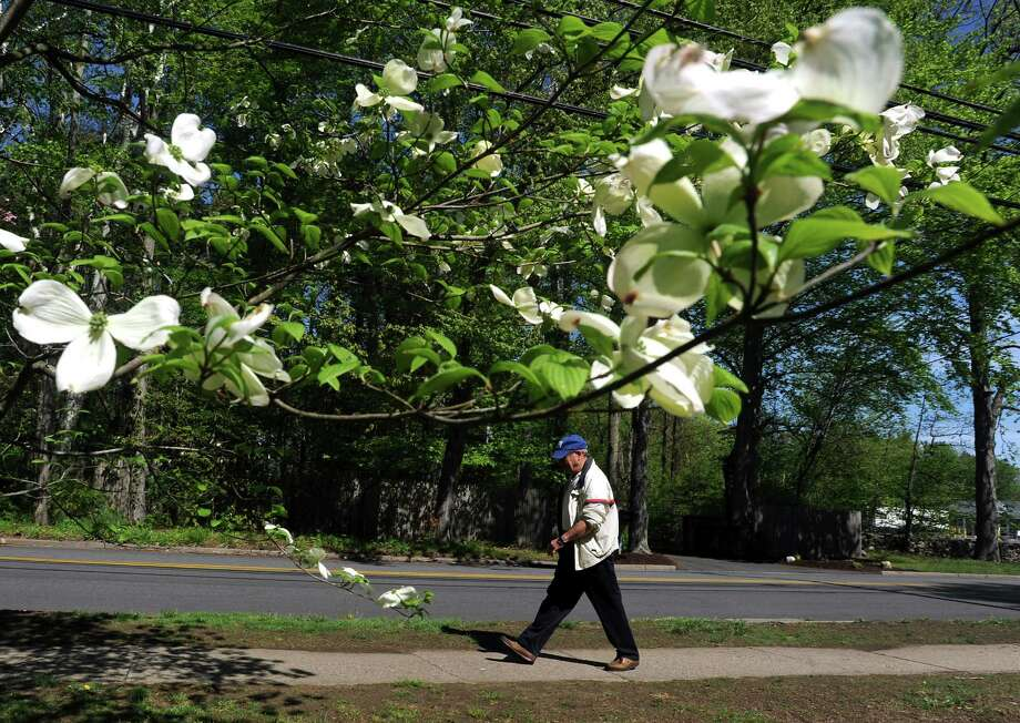 Sheldon Gershman walks his daily route past Riverside paro on Brookside Dr. in Fairfield, Conn. on Friday, May 10, 2013. The temperature in the area was expected to in the mid to upper seventies today. Photo: Cathy Zuraw / Connecticut Post