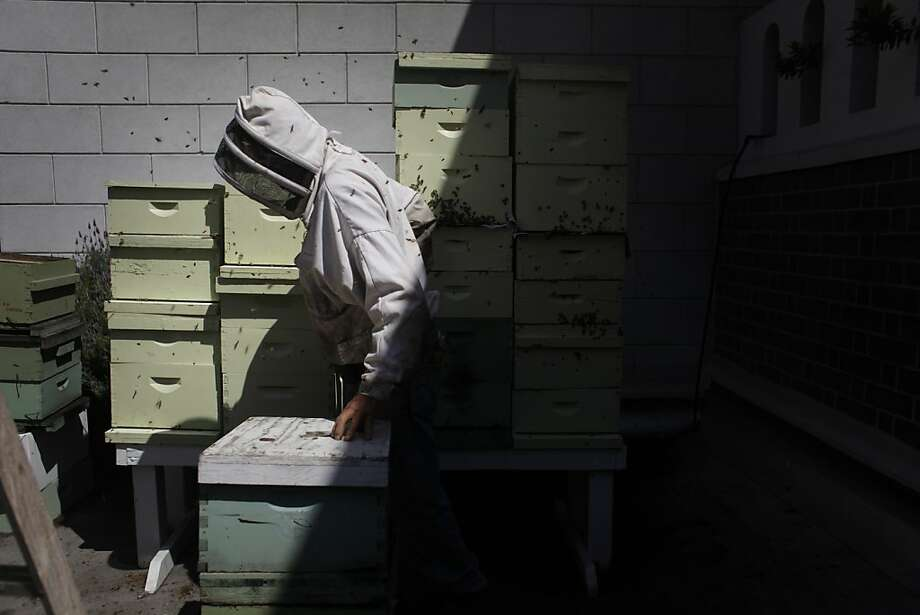 Master beekeeper Spencer Marshall tends to four double queen beehives on the roof of the Fairmont Hotel in San Francisco. Photo: Mike Kepka, The Chronicle