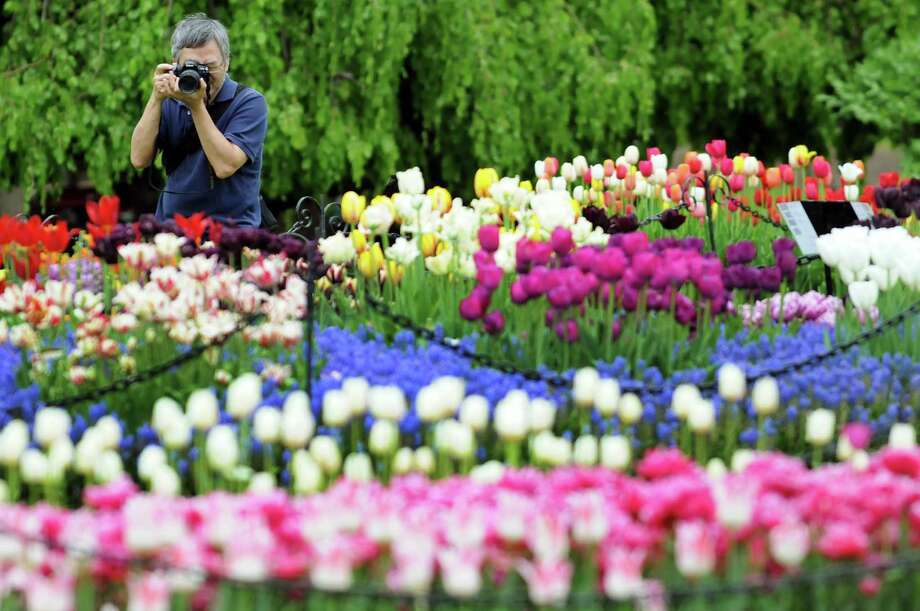 Anthony Park of Loudenville photographs the tulips during the Tulip Festival on Saturday, May 11, 2013, at Washington Park in Albany, N.Y. (Cindy Schultz / Times Union) Photo: Cindy Schultz / 00022344A