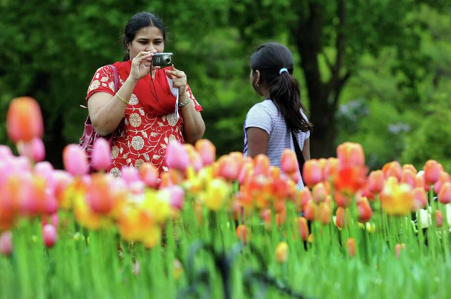 A woman photographs her daughter with the tulips during the Tulip Festival on Saturday, May 11, 2013, at Washington Park in Albany, N.Y. (Cindy Schultz / Times Union) Photo: Cindy Schultz / 00022344A