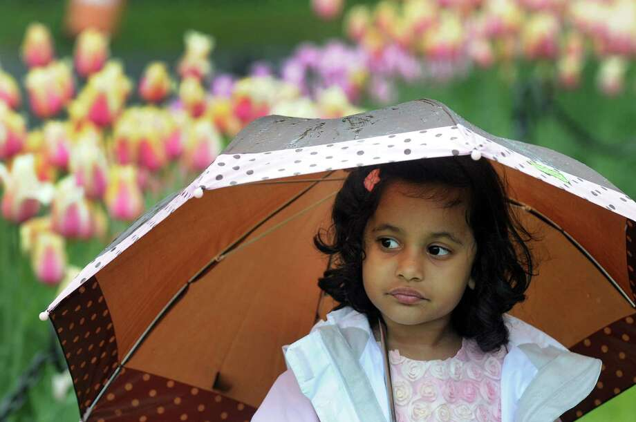 Saanvi Reddy of Shrewsbury, Mass. shields herself from the rain during the Tulip Festival on Saturday, May 11, 2013, at Washington Park in Albany, N.Y. (Cindy Schultz / Times Union) Photo: Cindy Schultz / 00022344A
