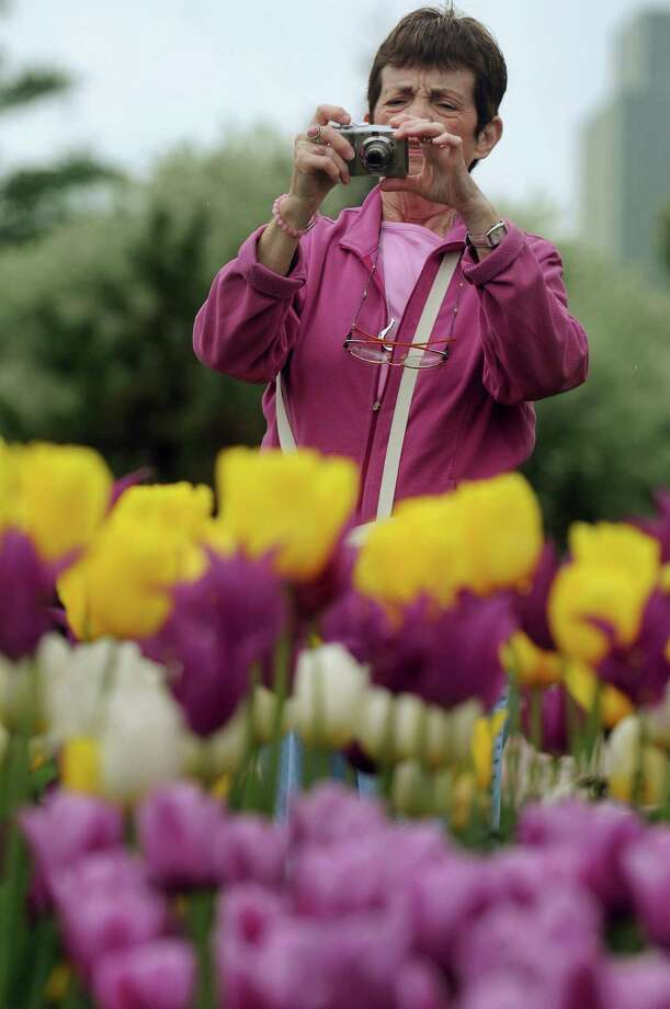 Maureen Foley of Colonie photographs tulips during the Tulip Festival on Saturday, May 11, 2013, at Washington Park in Albany, N.Y. (Cindy Schultz / Times Union) Photo: Cindy Schultz / 00022344A