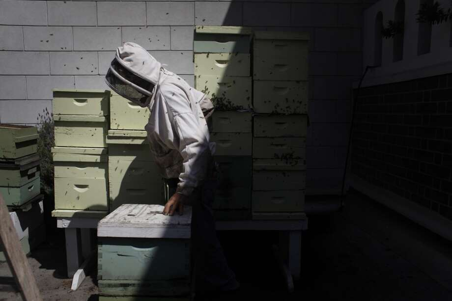 Master beekeeper Spencer Marshall tends to four double queen beehives on the roof of the Fairmont Hotel in San Francisco. He said these four hive produced over 1000 lbs of honey last year alone.