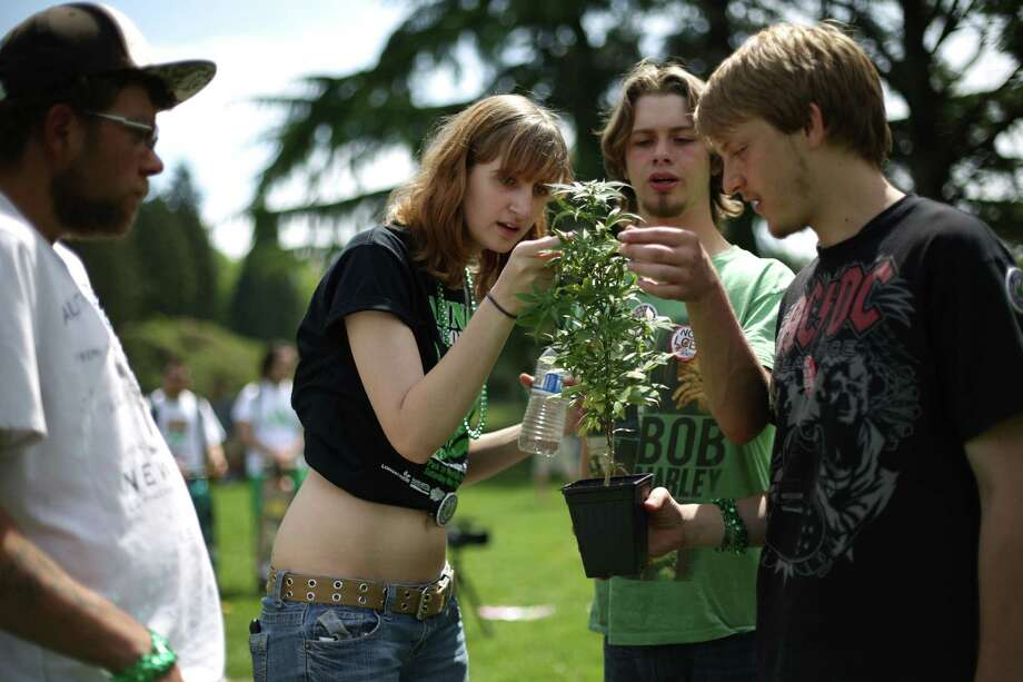 From left, Forrest Dorsey, Sydney Jablonski, Dylan Banks and Justin Pulford look over one the marijuana plants handed out to participants during the Cannabis Freedom March. Photo: JOSHUA TRUJILLO, SEATTLEPI.COM / SEATTLEPI.COM