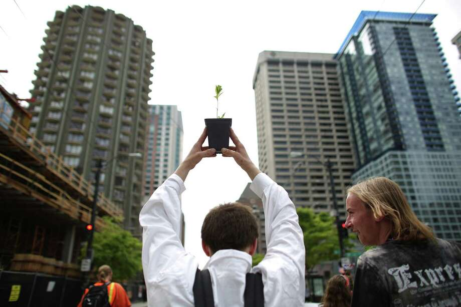 A man hoists a small marijuana plant during the Cannabis Freedom March. Photo: JOSHUA TRUJILLO, SEATTLEPI.COM / SEATTLEPI.COM