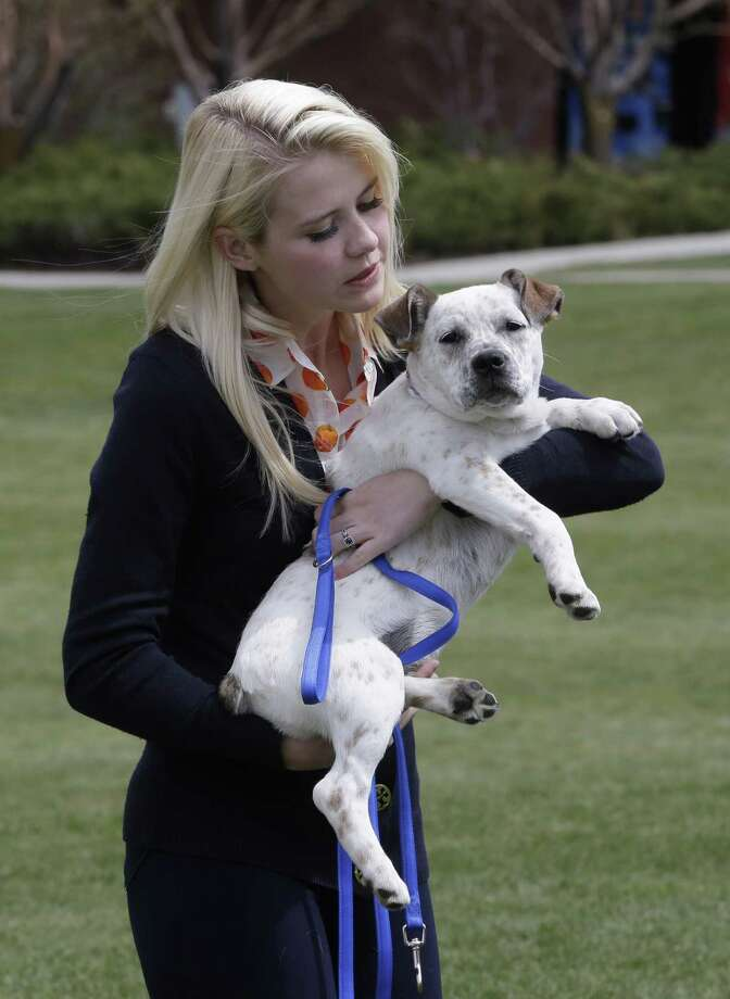 "Elizabeth Smart plays with her dog following an interview Tuesday, May 7, 2013, in Park City, Utah. Smart said she's elated to hear about three Cleveland women who escaped Monday after they disappeared a decade ago.""I am so overjoyed ""so happy to hear another happy ending,"" Smart said Tuesday on ABC's ""Good Morning America"", adding that the escape is proof families and victims should not give up hope. Smart was kidnapped from her bedroom in Salt Lake City when she was 14. She was freed nine months later when she was found walking with her captor on a suburban street in March 2003. Photo: AP"