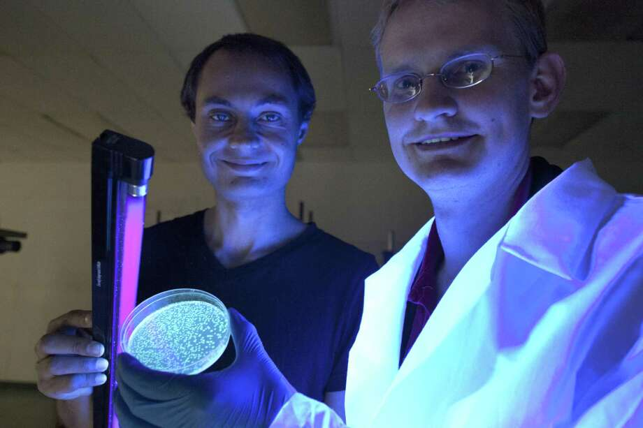 Glowing plant project scientists Antony Evans, left, and Kyle Taylor demonstrate bacteria with jellyfish genes that glow at Biocurious, a 'communal laboratory' in Sunnyvale, Calif. Photo: Peter DaSilva / New York Times