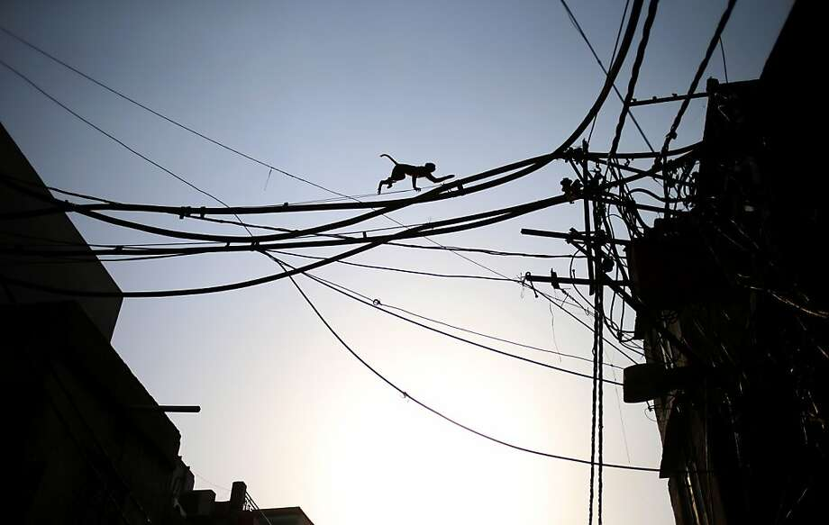 How monkeys beat the trafficin New Delhi. Photo: Saurabh Das, Associated Press